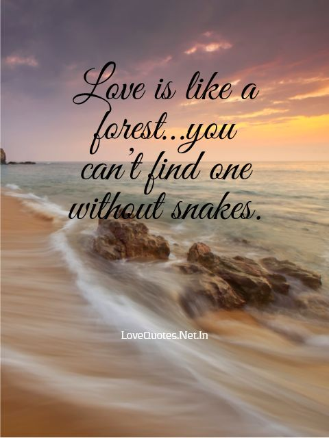 Love Is Like a Forest