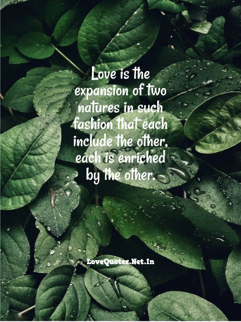 Love Is The Expansion Of Two Natures